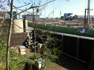 Hives in the middle of London, right by St Pancras station