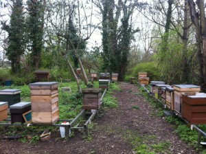 Ealing and District hives in Easter, 2012