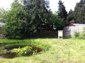 Tthe Walmer Gardens hive, and lively pond