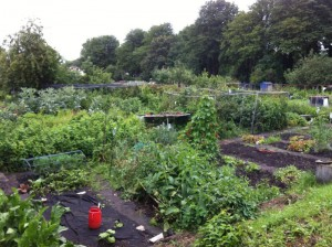 Staveley Road Allotment, the day I received my key. Hurray!