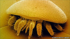 The nasty Varroa destructor mite
