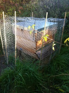 Green wood pecker protection, with a chicken wire surround