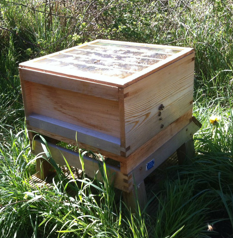 The brood box, topped with a queen excluder