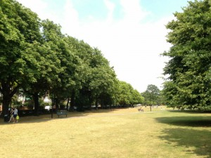 A line up of handsome leafy trees in West London