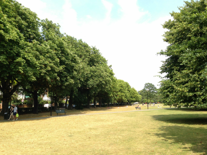 A line of Horse Chestnet, London Plane, and Lime trees makes up a leafy green Chiswick backdrop